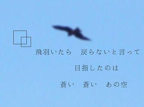 歌詞画 〜ブルーバード〜の画像(プリ画像)