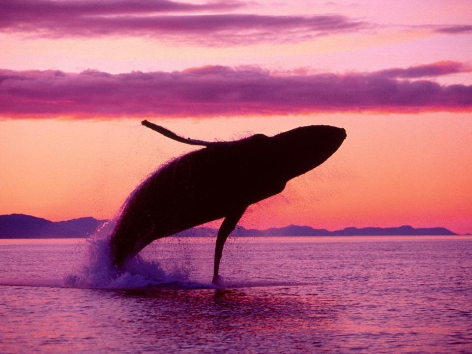 紫色の夕焼けとクジラ