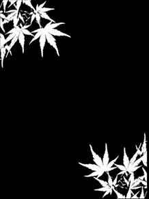 和柄 背景 黒白の画像(和柄に関連した画像)