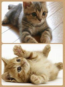 キュン猫の画像(プリ画像)