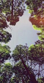 木 々 .の画像(木々に関連した画像)