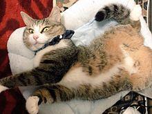 おもしろ猫の画像(プリ画像)