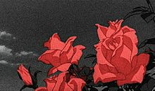 薔薇 プリ画像