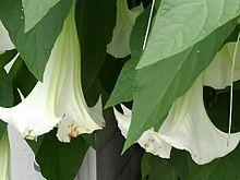 夏の大きな花🌼の画像(エンジェルに関連した画像)