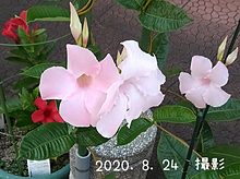 花💮の画像(白色に関連した画像)