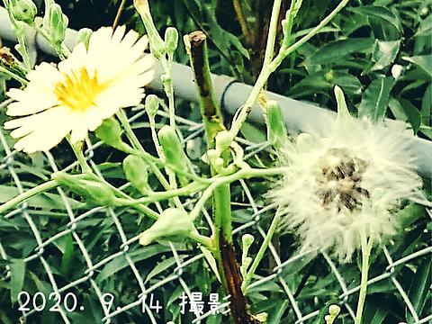 花💮の画像 プリ画像