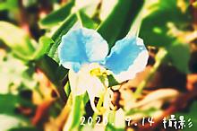 花💮の画像(・言葉に関連した画像)