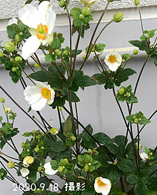 秋の花💮の画像(白色に関連した画像)