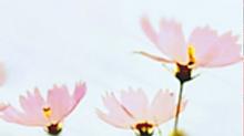 LOVEコスモス②の画像(LOVEに関連した画像)