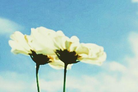 LOVEコスモス③の画像 プリ画像
