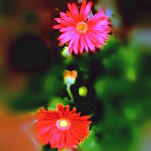 花🌼の画像(自然に関連した画像)