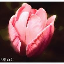花🌸の画像(チューリップに関連した画像)