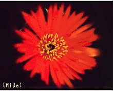 花🌼の画像(赤色に関連した画像)