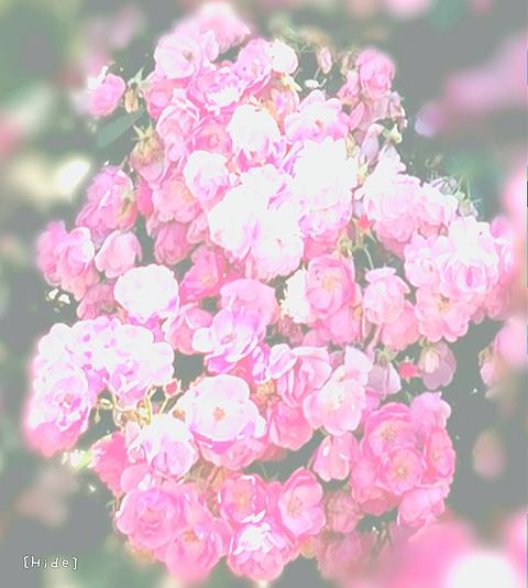 花🌹の画像(プリ画像)