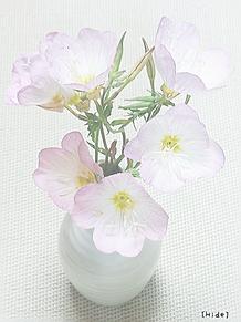 花🌸の画像(薄ピンクに関連した画像)