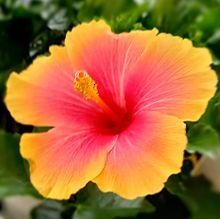 花🌺の画像(ピンク色に関連した画像)