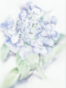 花💠 プリ画像