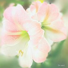 花🌸 プリ画像
