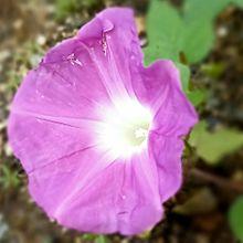 花🏵️の画像(ピンク色の花に関連した画像)