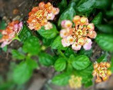 花🌼の画像(ピンク色の花に関連した画像)