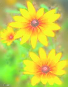 花🌼 プリ画像
