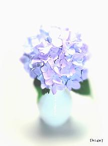 紫陽花💠 プリ画像