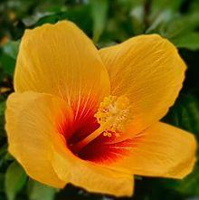 花🌺 プリ画像
