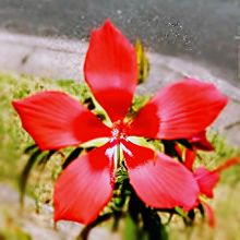 紅葉葵🌸 プリ画像