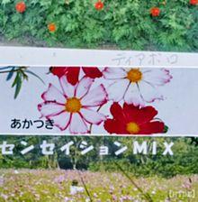 秋桜園の画像(名前に関連した画像)