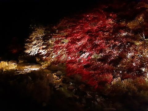 夜の紅葉🍁の画像(プリ画像)