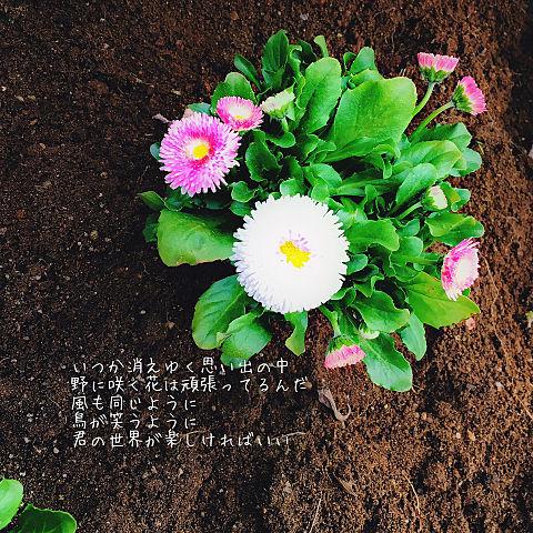 ノニサクウタ/Mrs.GREENAPPLEの画像(プリ画像)