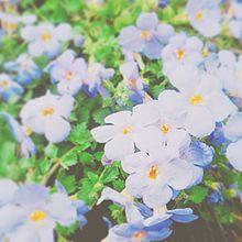 🌻お花🌻 プリ画像