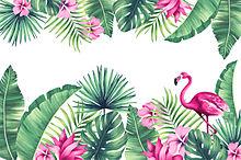 アロハの画像(ハワイアンに関連した画像)