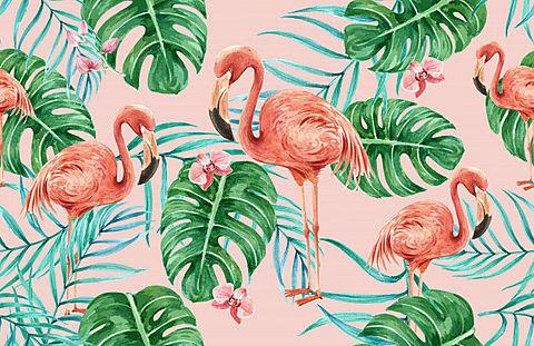 フラミンゴの画像 プリ画像