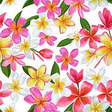 プルメリアの画像(ハワイアンに関連した画像)