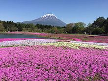 富士芝桜まつり2016の画像(プリ画像)
