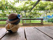Summer...♪*゚の画像(#和泉一織に関連した画像)