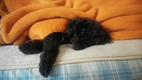 飼っている犬😆😆の画像(プリ画像)