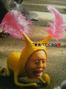 ホトケアカバネの画像(ホトケアカバネに関連した画像)