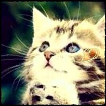 フリーアイコンの画像(猫 おしゃれに関連した画像)