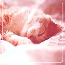 フリーアイコン 83の画像(猫 おしゃれに関連した画像)