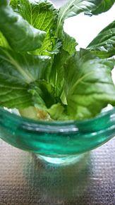 ガラス食器×小松菜 プリ画像