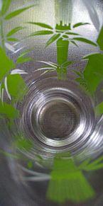 ガラス食器2/2の画像(食器に関連した画像)