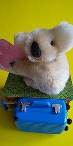 ぬいの旅×オーストラリアの画像(オーストラリアに関連した画像)