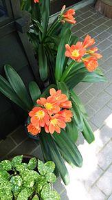 花×庭 プリ画像