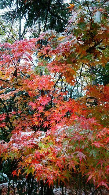紅葉×雪の画像(プリ画像)