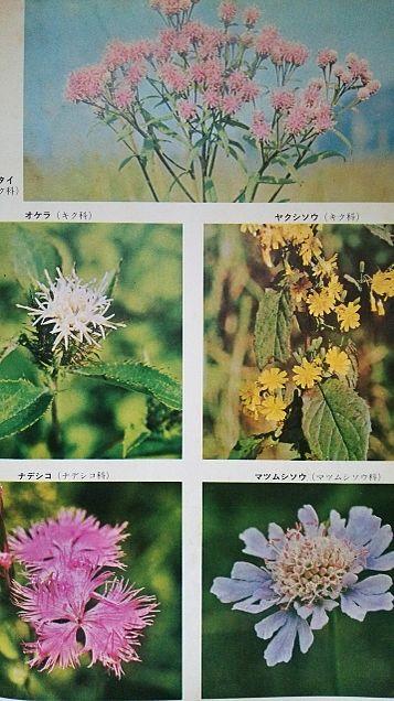 小学館図鑑写真×1962年の画像 プリ画像
