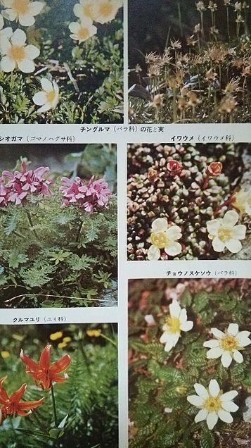 小学館図鑑写真×1962年の画像(プリ画像)