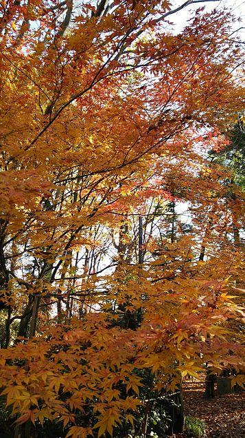 木×紅葉の画像 プリ画像
