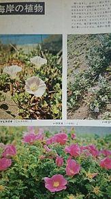 小学館図鑑写真×1962年 プリ画像